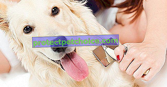 Problémy s vlasy u psů