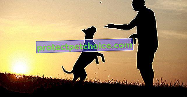 Zabraňte tomu, aby váš pes skočil na lidi
