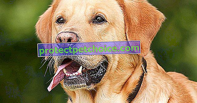 8 кучешки болести, които трябва да знаете абсолютно, защото те могат да се предадат на хората