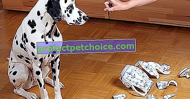 Kontrolirajte destruktivnog psa