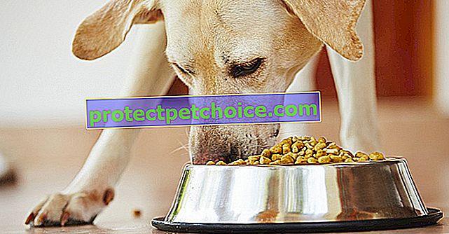 Opasna i otrovna hrana za pse