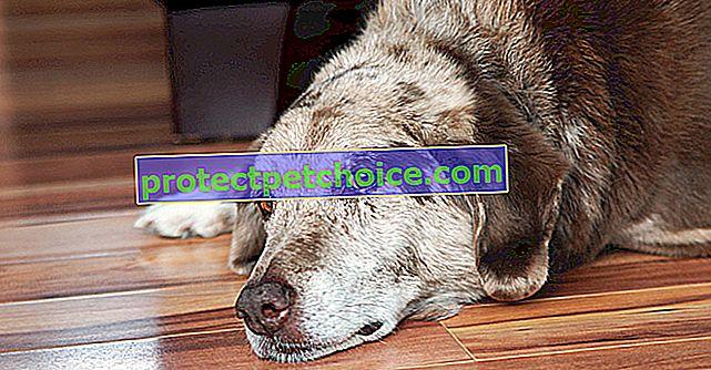 Znakovi upozorenja za rak kod pasa