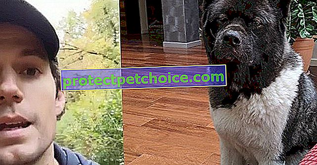 """Henry Cavill, herec """"Supermana"""", se stal virálním tím, že prohlásil, že miluje svého psa Kal!"""