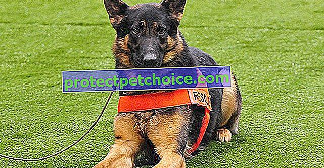 6 plemen psů s renomovaným silným čichem