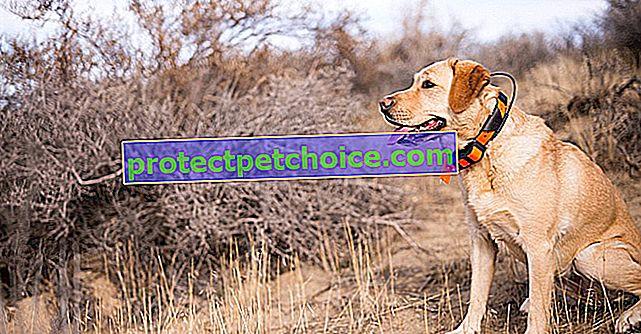 GPS obojek pro psy