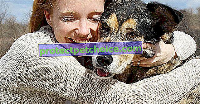 Осиновете куче от частно лице