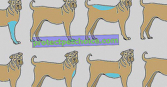 9 partes del cuerpo de tu perro para masajear para contribuir a su bienestar