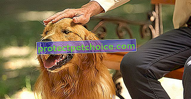 Derivación portosistémica congénita en perros