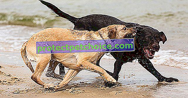 Sukobi muških i ženskih pasa