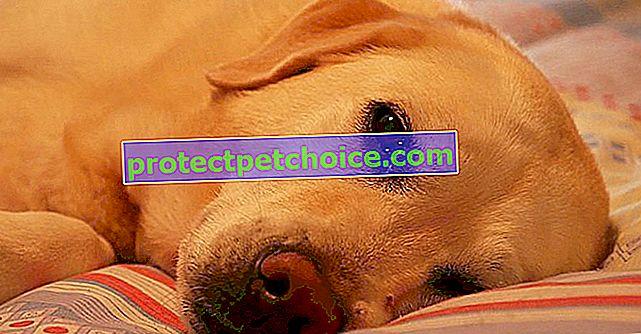 6 ідей, які допоможуть вашій собаці краще спати вночі