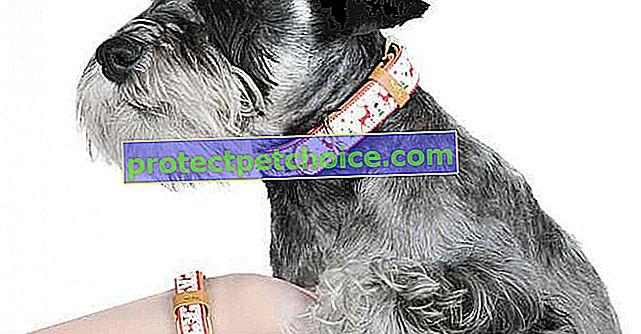 16 originálních a vtipných dárků pro vašeho psa