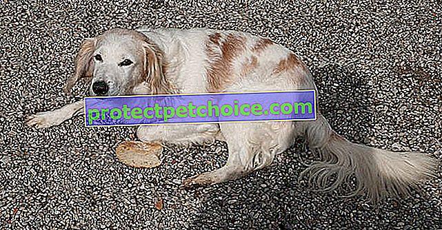 5 znakova da su bivši vlasnici maltretirali psa udomljenog iz skloništa!