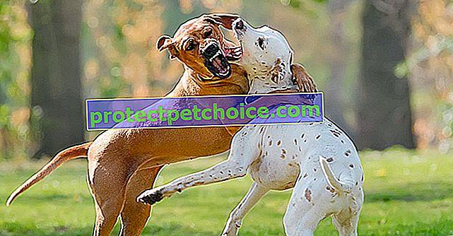 Interrumpir una pelea de perros