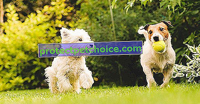 Мъжко или женско куче: кое да изберете?