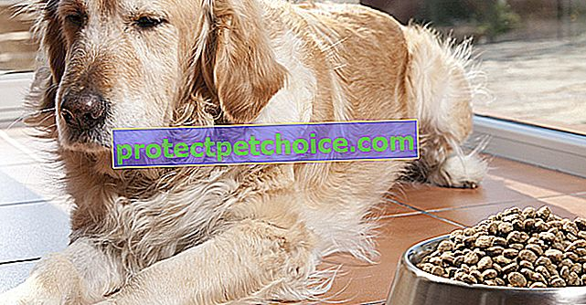 Anoreksja u psów