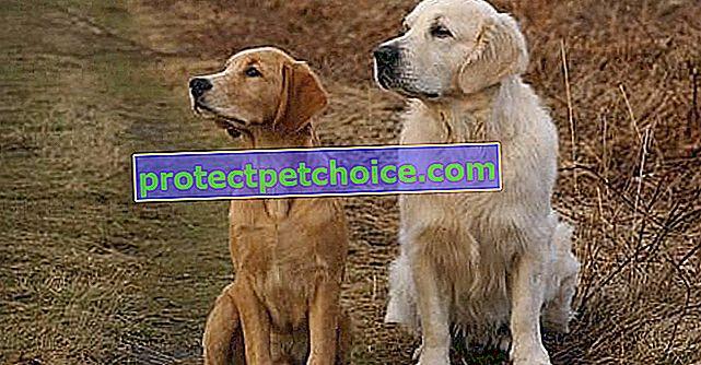 7 породи кучета, които се разбират доста добре с връстниците си