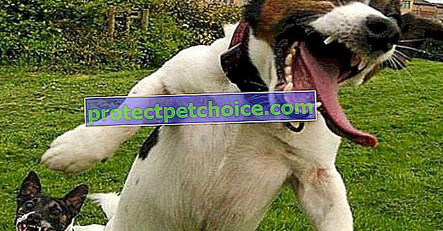 15 GIF-ów psów tak szczęśliwych, że całkowicie postradali zmysły!