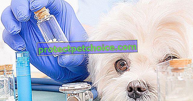 Хомеопатия за лечение на кучешки заболявания