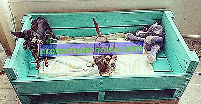 15 идеи за легло с палети за кучета