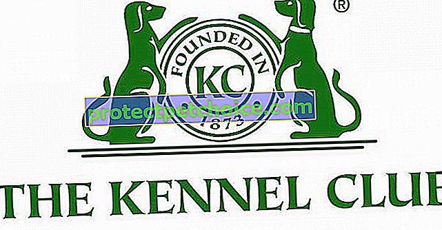 KC: Kennel Club
