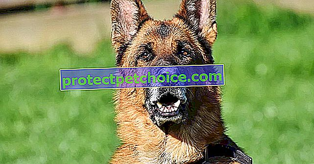 7 problemas de salud que pueden ser la causa de los malos olores en los perros
