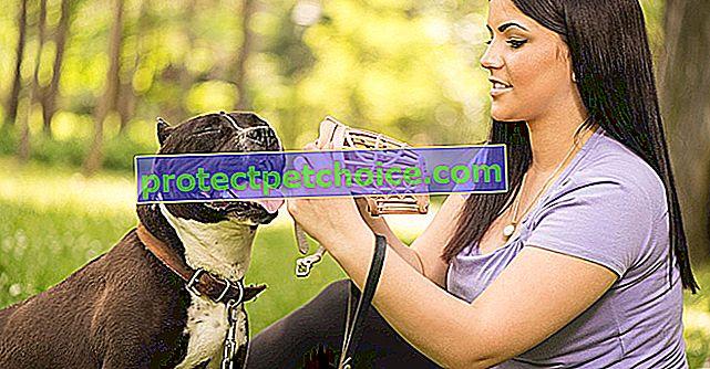 Povinná odpovědnost psa pro kategorii psů