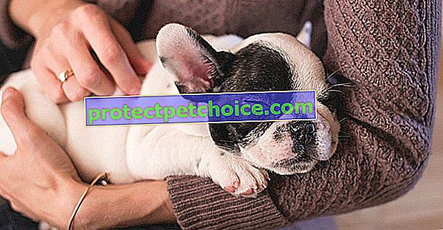 Phytobiovet - асортимент засобів по догляду за собаками та котами, що шанує природу