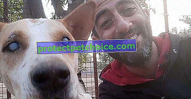 Цей сліпий пес дозволяє його радості вибухнути, коли він чує голос того, хто врятував його від багаторічних блукань!