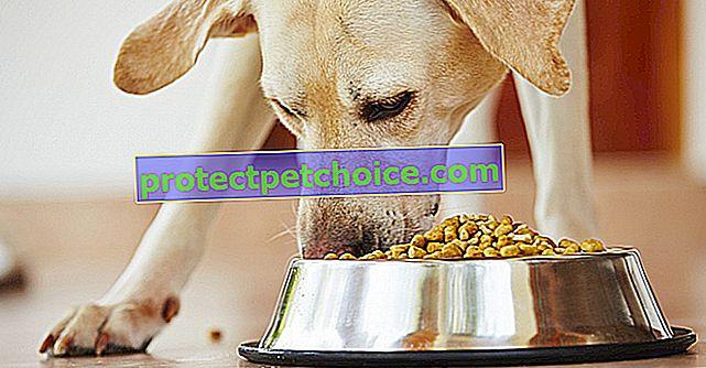 ¿Qué croquetas elegir para tu perro?