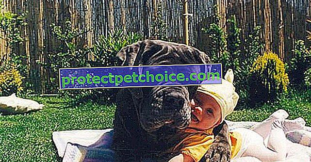 22 sjajne fotografije velikih pasa koji poziraju pored djece!