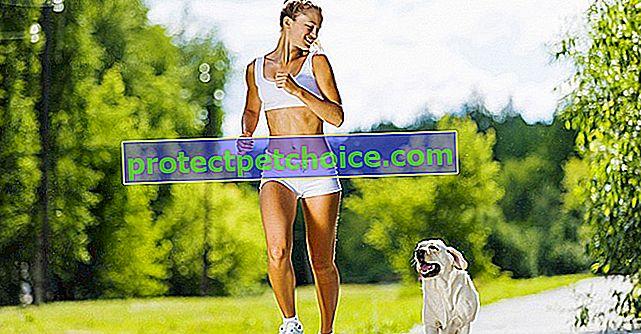 Cvičení se psem