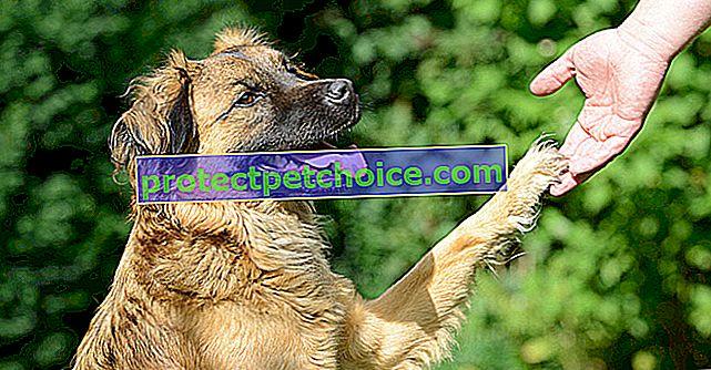 Prepoznajte bolest svog psa po simptomima