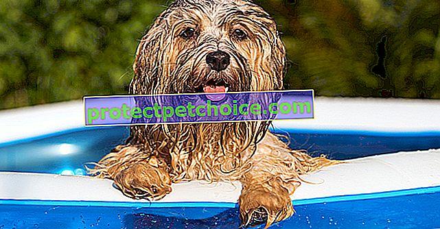 Кращі басейни для купання собаки