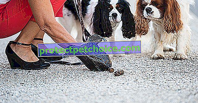 Най-добрите колекционери за събиране на изпражнения за кучета