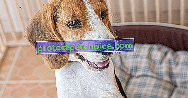 Най-добрите заграждения, за да предотвратите бягството на вашето куче