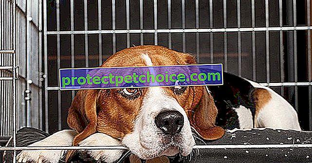 Najbolji kavezi u koje možete smjestiti svog psa