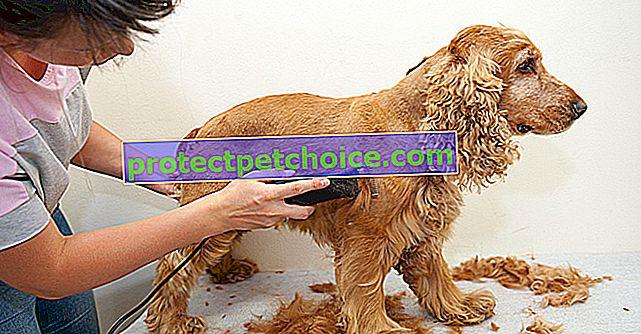 Най-добрите машинки за подстригване за бръснене на косата на вашето куче