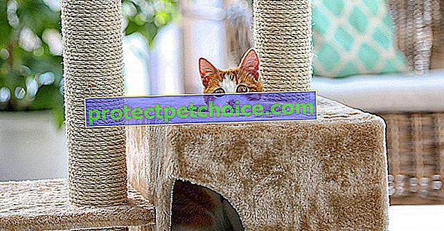 Най-добрите котешки дървета, за да се забавлявате и да драскате котката си