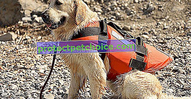 Nejlepší záchranné vesty pro vodní aktivity vašeho psa