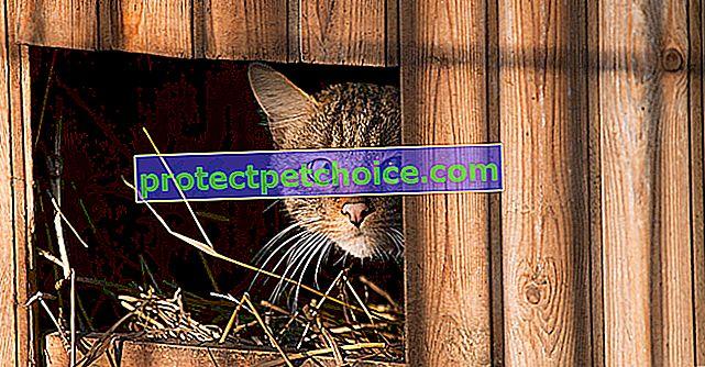Najlepšie chovateľské stanice, ktoré chránia vašu mačku