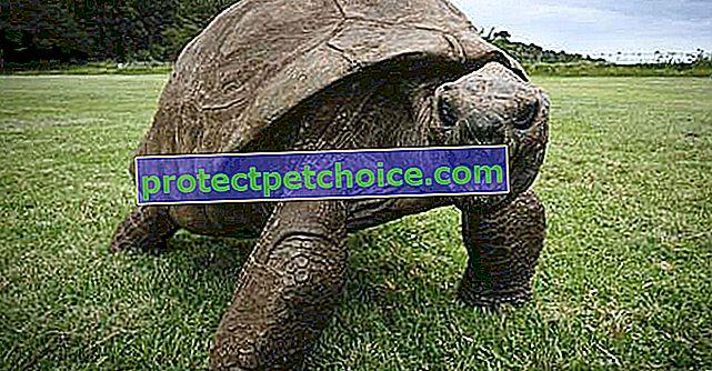 ¡Con casi 200 años, esta tortuga es la más antigua del mundo!