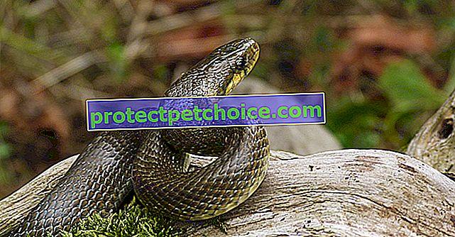 Péče o hady a hygiena