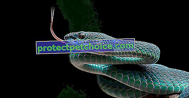 ¿Cuánto cuesta una serpiente y dónde comprarla?