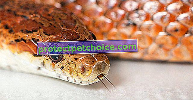 Укусы змей