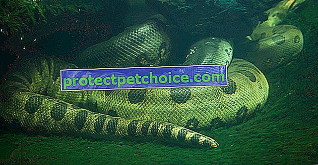 Hadová voda potřebuje