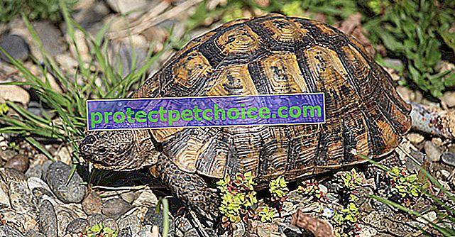 Kolik želva stojí a kde ji koupit?