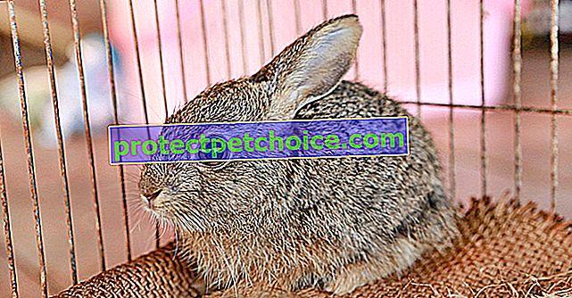 Elegir una jaula para tu conejo