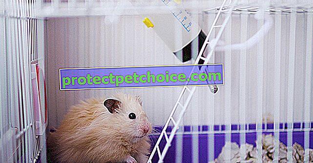 Выбор клетки для хомяка