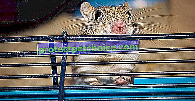 Избор на кутия за отпадъци за вашата мишка