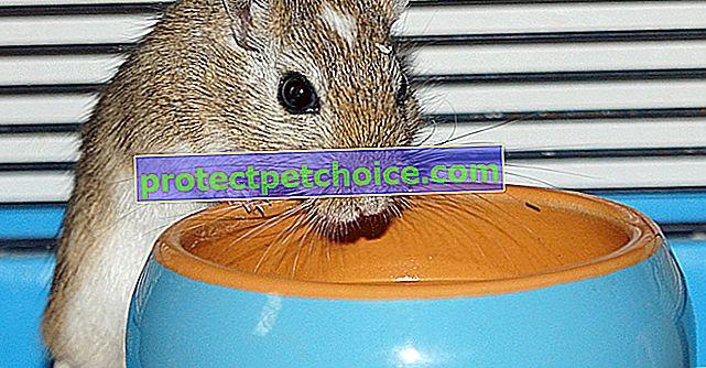 Изисквания към водата на мишката